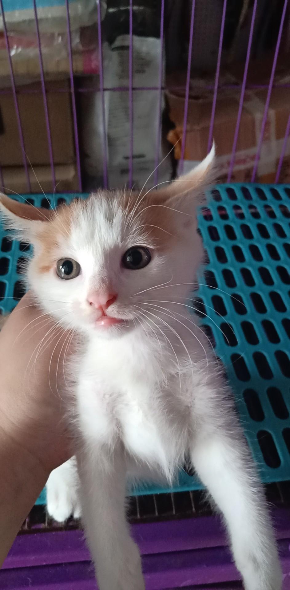 猫猫免费领养